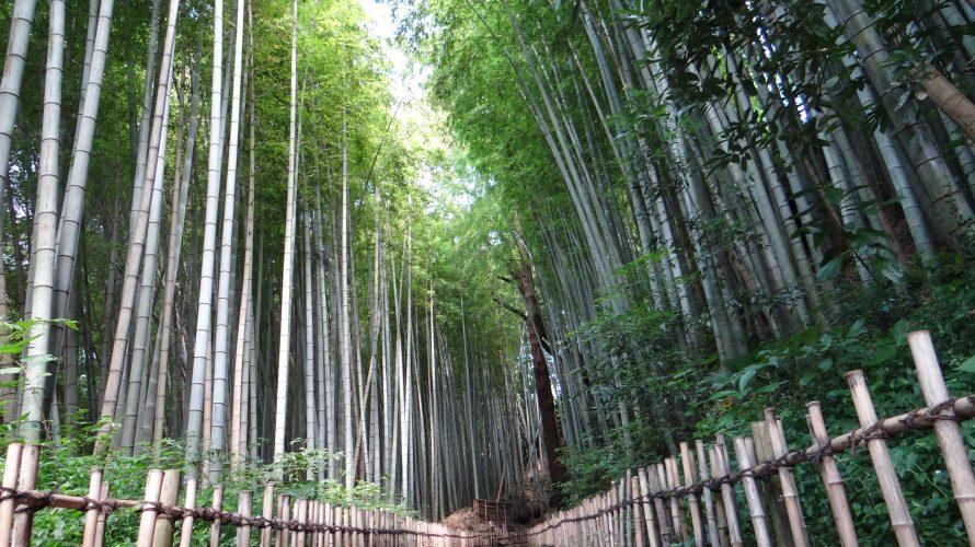 竹林の名所「ひよどり坂」佐倉城址公園から武家屋敷通りへ。-佐倉⑵