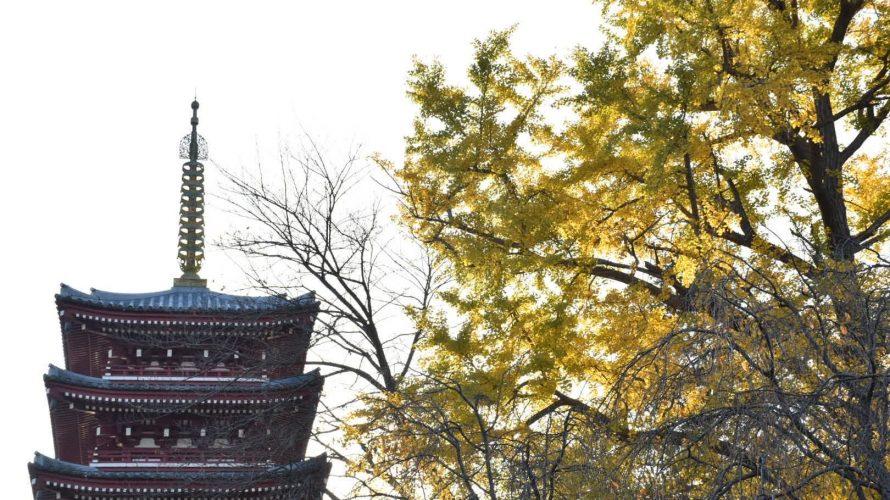「本土寺」立派な参道。杉並木は水戸光圀公の寄進、紅葉と紫陽花が有名なお寺へ -北小金⑷