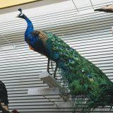 「鳥の博物館」世界の鳥コーナーで268点の美しい鳥の標本とご対面 -我孫子⑻